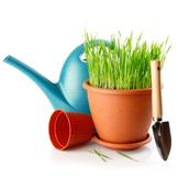 Ogród i narzędzia